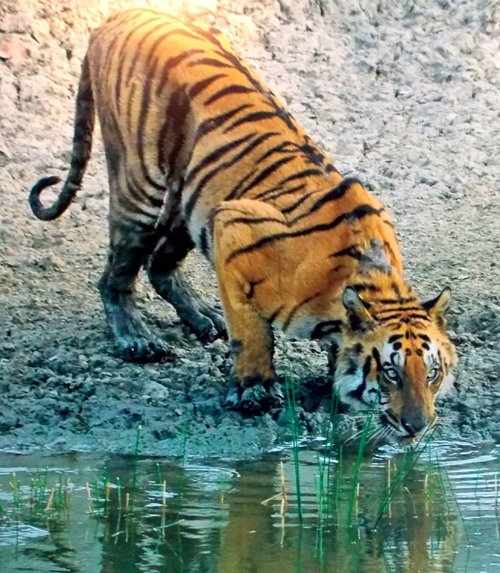Sunderban Tour Packages