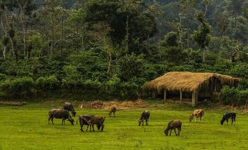 Coorg Wildlife Tour