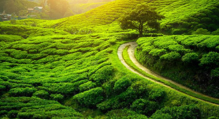 Darjeeling Weekend Tour