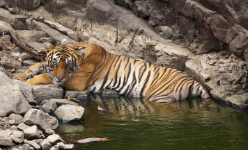 Jim corbett Wildlife Tour
