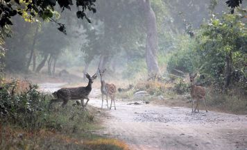 Jim Corbett Sightseeing Tour