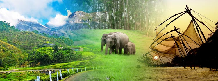 Thekkady Family Package