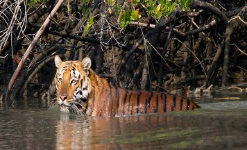 Sunderbans Wildlife Tour