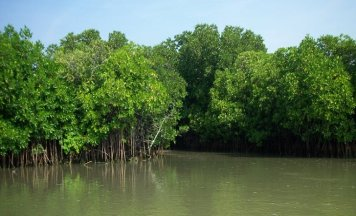Sunderbans Holiday Tour