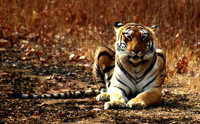 Maharashtra Wildlife Tour Package