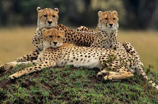 Madhya Pradesh Wildlife Tour Package
