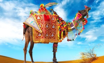 Best Rajasthan Tour