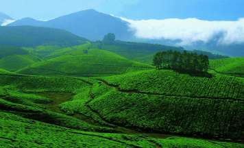 Athirappilly Cochin Munnar Tour Package