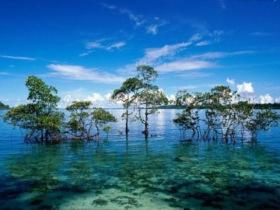 Andaman Tour Packages From Pune