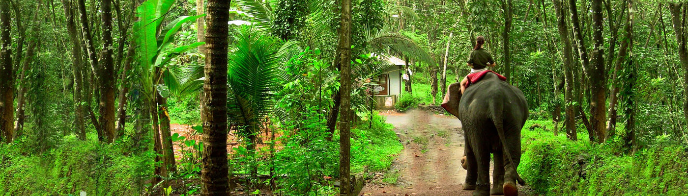 Best Things To Do And See In Assam